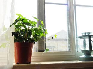 窗台绿色植物,