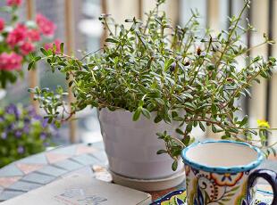 阳台开阔的空间,充足的阳光,清新的空气和盎然的绿植,让悠闲的时光在馥郁的茶香、淡淡的书香和扑鼻的花香中变得惬意十足……,