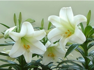 植物花卉大作用 家居风水巧搭配