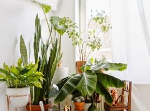刚装修好的房子放什么植物最好