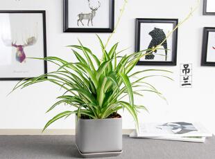 厨房净化空气,用这几种植物!