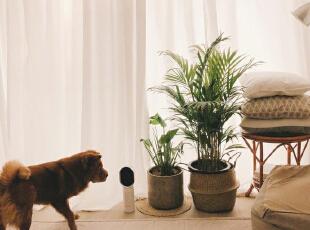 ,客厅,白色,原木色,