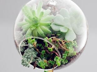 淘金币 平底球形花圃 可悬挂花器/玻璃花瓶 家居DIY装饰创意摆件,DIY,