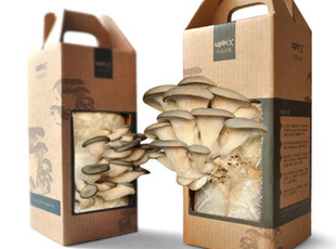 【UPINX】桌面平菇园 创意植物 体验平菇神奇的生长过程 新品现货,创意礼品,