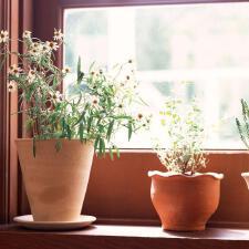 植物扮家 让自然永驻
