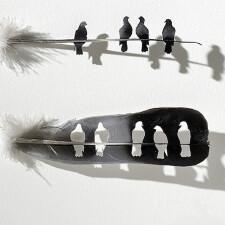 雕刻在羽毛上停留的时光