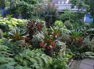 ,热带风情,园艺,