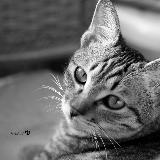 窗外的猫咪