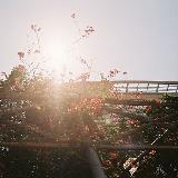 西边晨美的朝阳