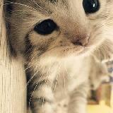 爱吃花的小猫