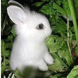 流浪的白兔