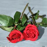 玫瑰的花的约定